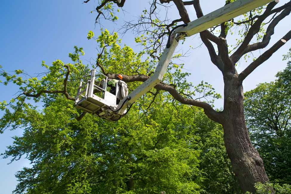 Pruning-Services